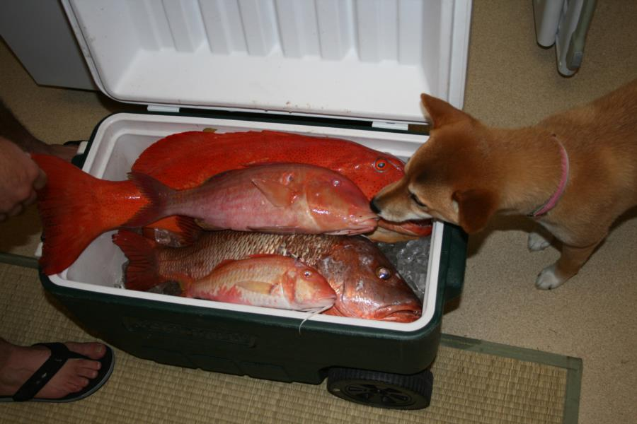 Yoshi likes the cooler