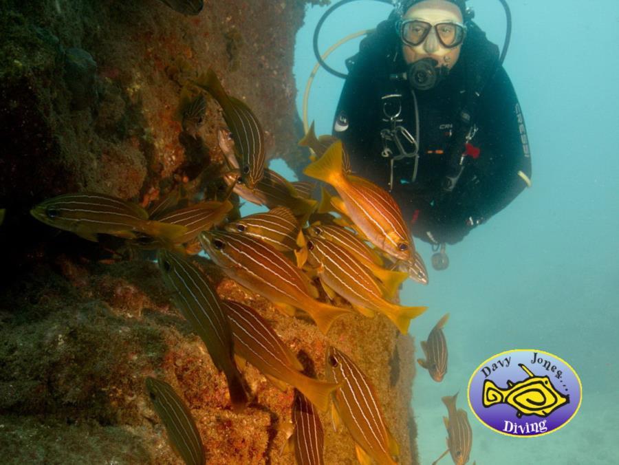 Scuba diver with striped grunts, gran Canaria