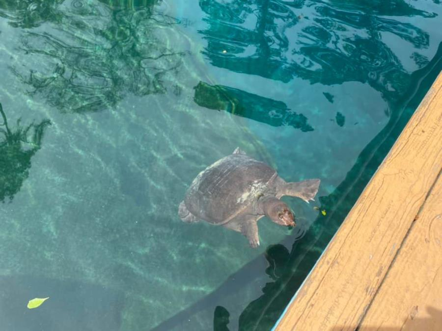 Virgil the Turtle at Blue Grotto