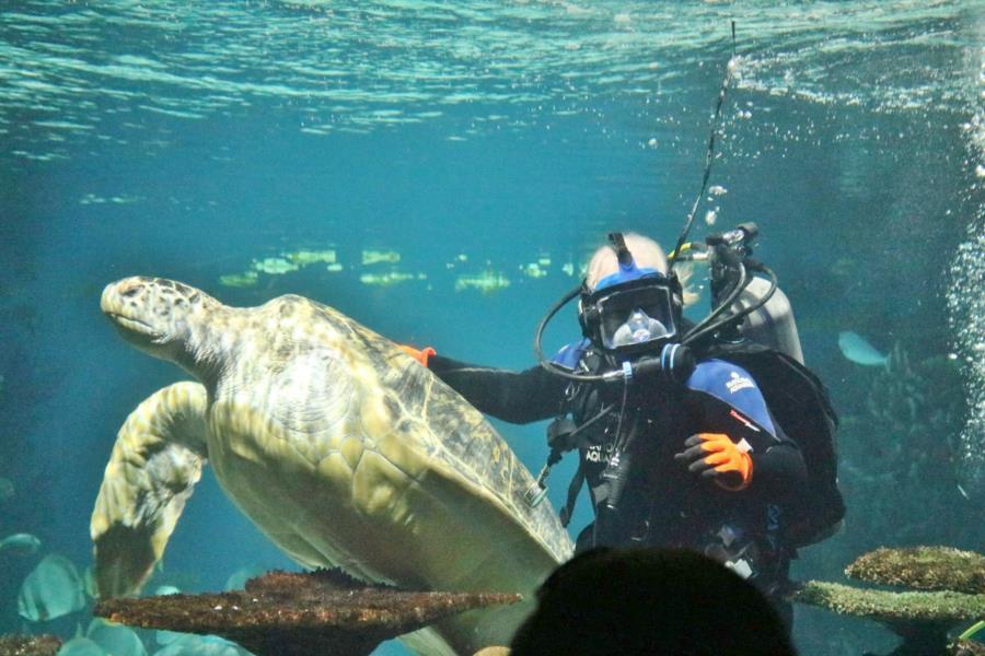 Me and Calypso, National Aquarium, Baltimore, Md.