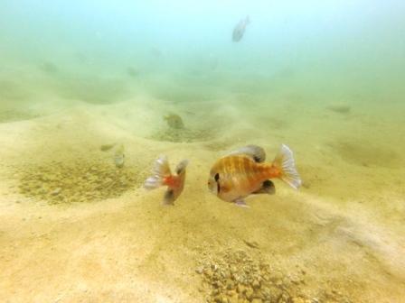 Women's Dive Day: Fantasy Lake