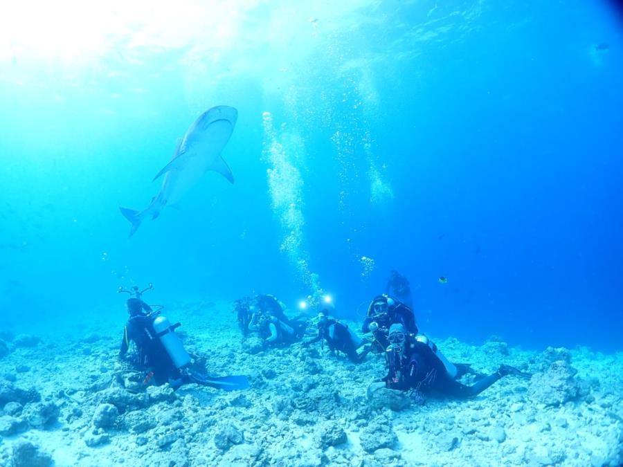 Deep South Maldives