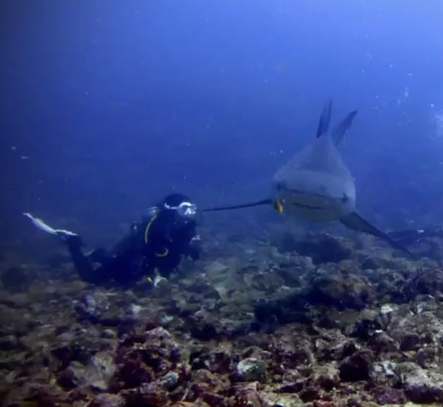 DivingWeasel's Profile Photo