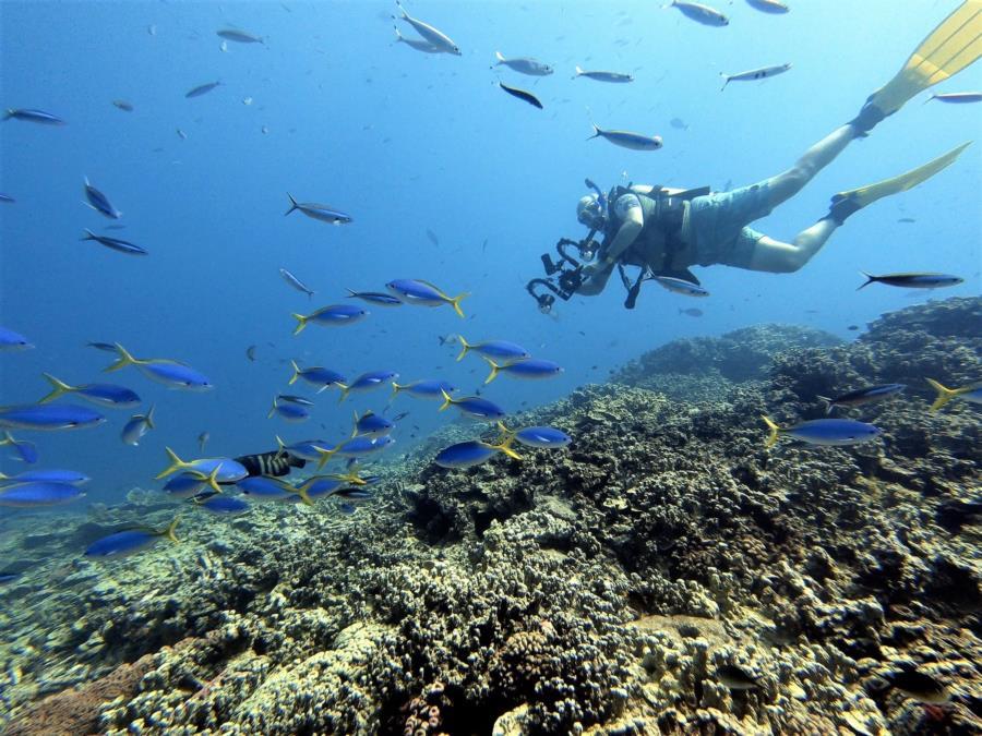 Marshalls Coral Head