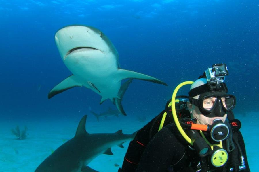 Bahamas Shark Dive 2
