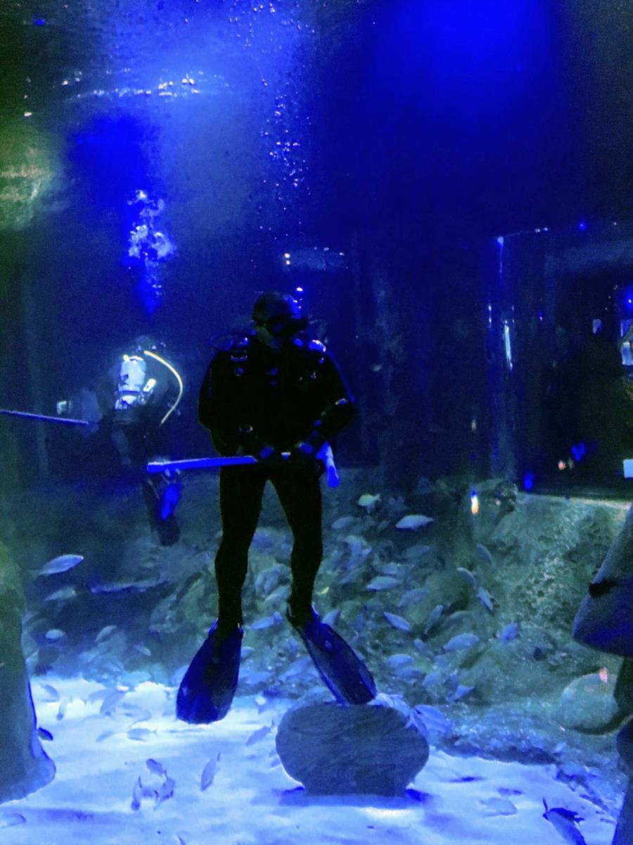 Sea Life Aquarium, Orlando