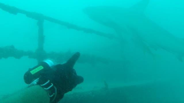 Bull Shark USS Vandenburg