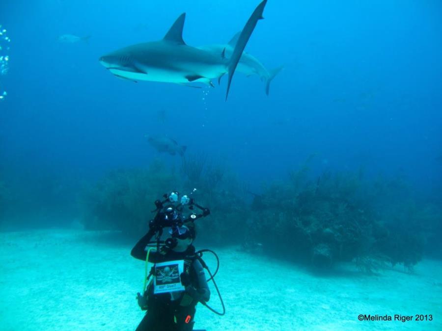 Grand Bahama 400th dive