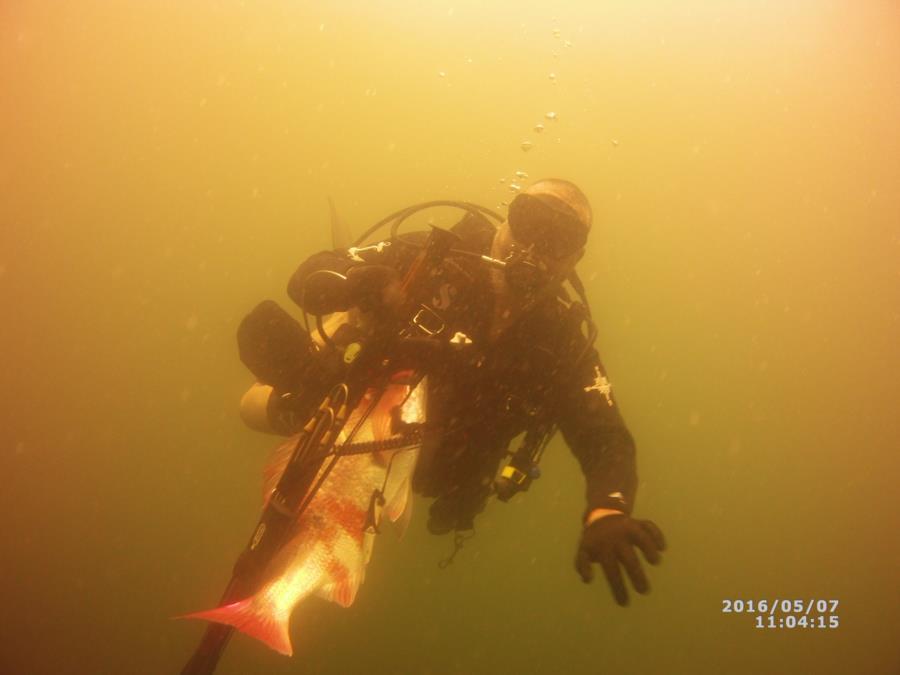 diver237