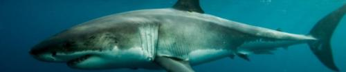 Cancer Survivors Dive with Sharks: Cancer, Exercise and Scuba Diving