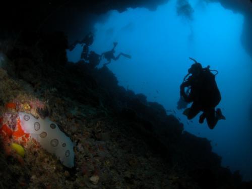 TURTLE TOMB - Sipadan cave