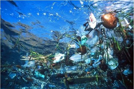 A Gyre of Marine Litter: The Great Pacific Garbage Patch, Trash Vortex