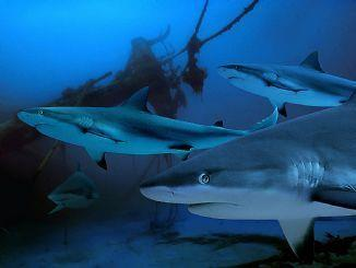 How to Prevent a Shark Attack while Scuba Diving