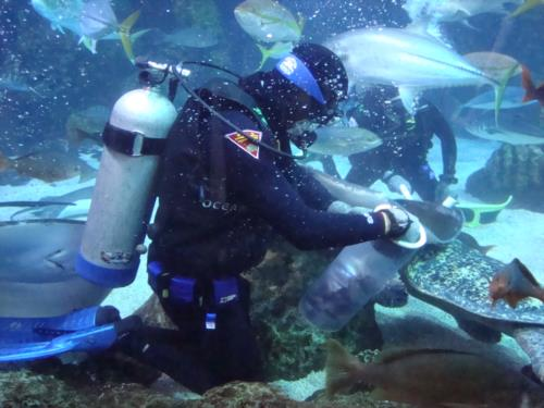 Diver Dave & the Denver Aquarium – Episode 2 (Under the Sea)