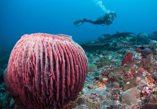 Bali – A Diver's Paradise?