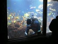 Bonifide Aquarium Diver, Finally!