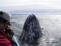 Baja Gray Whale Trip Planning