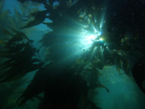 Kelp Usage