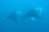 Diving in Fiji Blog