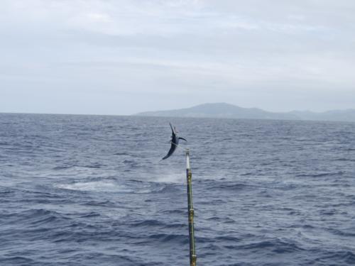 Take Marlin Off the Menu campaign