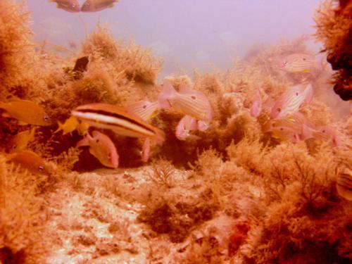 shore dive West Palm Beach Fl.