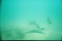 6/30/07 Diver`s Cove