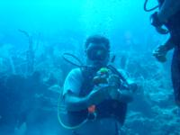 Puerto Morelos diving???