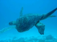 looking for divers for Galapagos dive trip