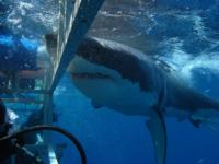 Another Great White Adventure!