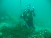 Anacapa Island Summer 07
