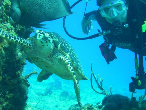Trip to Cozumel