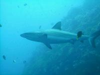 Palau Diving 14-19 Feb