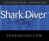 6 Gill Shark:Rare Find