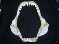 White Shark Jaws for Sale eBay