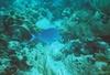 Nichole from Rochester MN | Scuba Diver