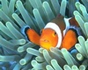 Putu Arnama from Denpasar Bali | Dive Center