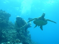 Hawaii Scuba Divers Dive Blog