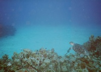 Grand Cayman - Cobalt Coast/Dive Tech