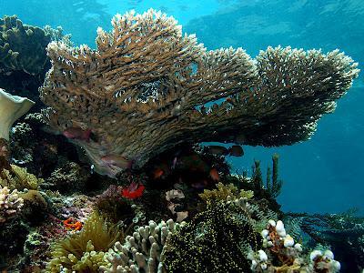 Coral Reef Cornucopia: rich coral biodiversity off Madagascar