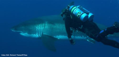 Sharks, the Beauty of the Ocean Predator: March lecture/exhibition event in Long Beach, CA