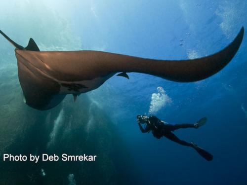 Diving Mexico's Socorro Island