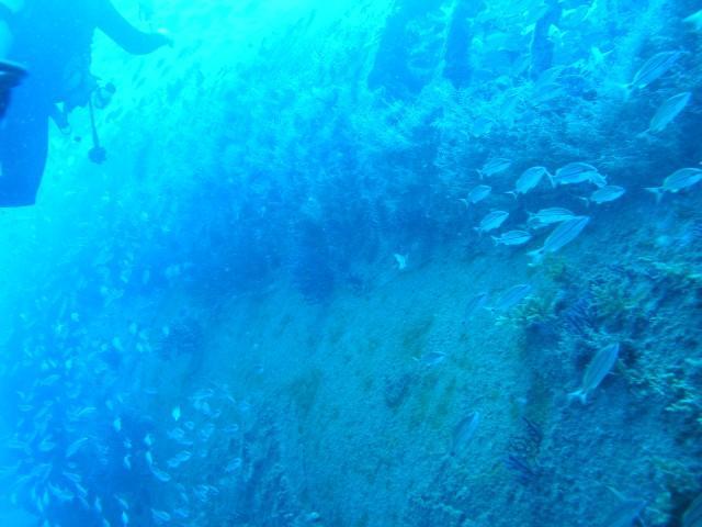 U-352 - Hull