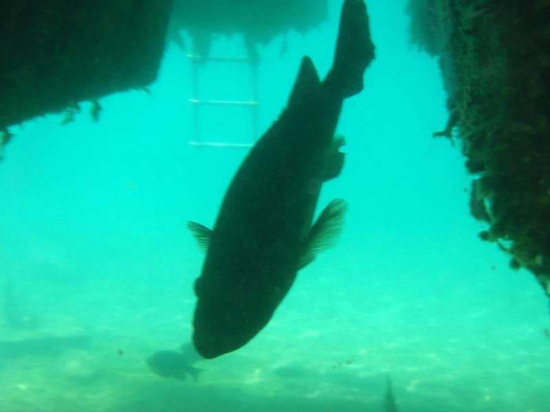 Lake Phoenix (previously Lake Rawlings) - Marine Life