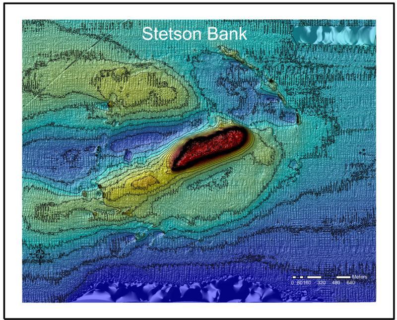 Stetson Bank (Texas Flower Gardens) - Stetson Bank - Depth Chart