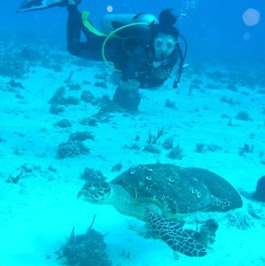 Playa Del Carmen - Tortugas reef