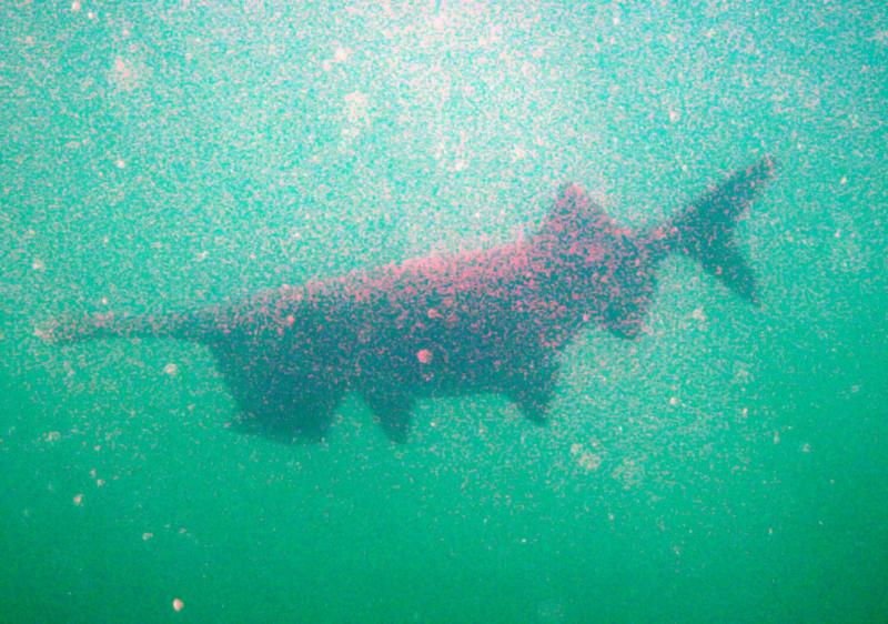 Haigh Quarry - haigh quarry paddlefish
