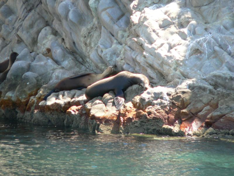 San Pedro Island/Seal Island - San Pedro (Seal Island) Really...