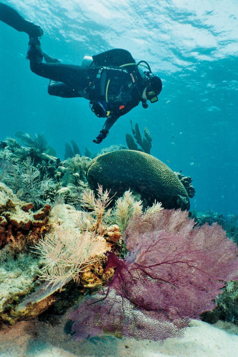 Molasses Reef - Molasses Reef coral