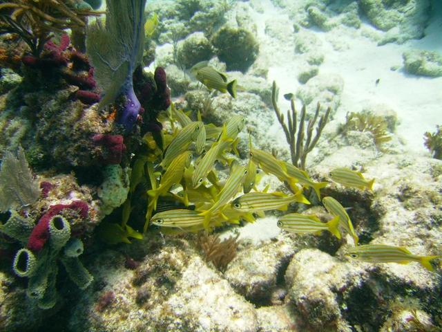 Molasses Reef - Fishy Fishy