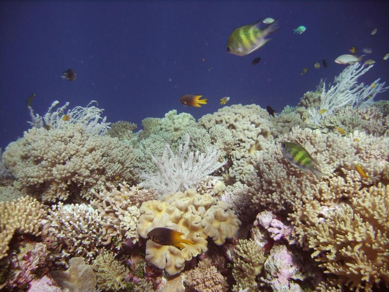 Tukang Besi Islands (Wakatobi Islands) - Reef Life - Wakatobi Islands